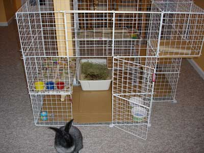 how to build a rabbit condo